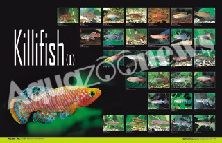 鱂魚海報Ⅰ