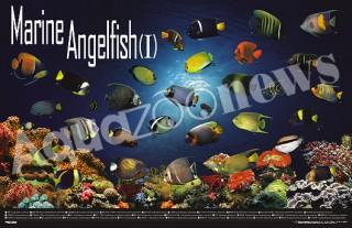 海水魚海報