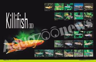 鱂魚海報Ⅱ