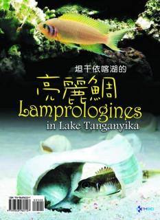 坦干依喀湖的亮麗鯛