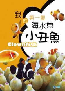 我的第一隻海水魚-小丑魚